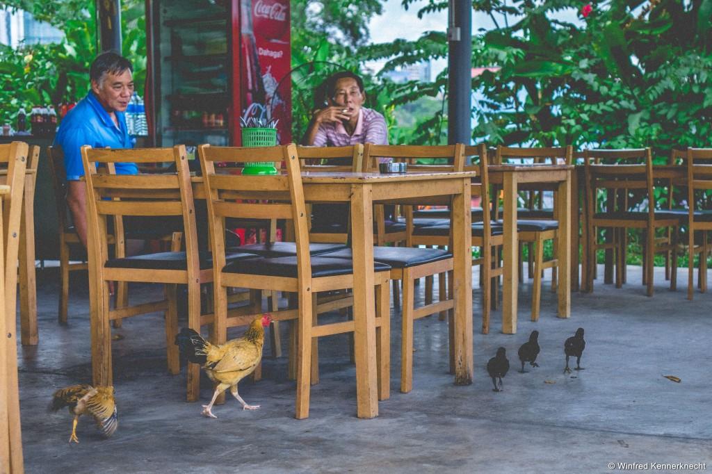 Chicken running around at a restaurant in Johor Bahru, Malaysia.